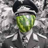 MelonBush